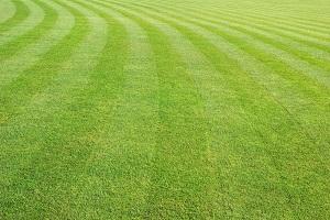 lawn mowing in woking surrey